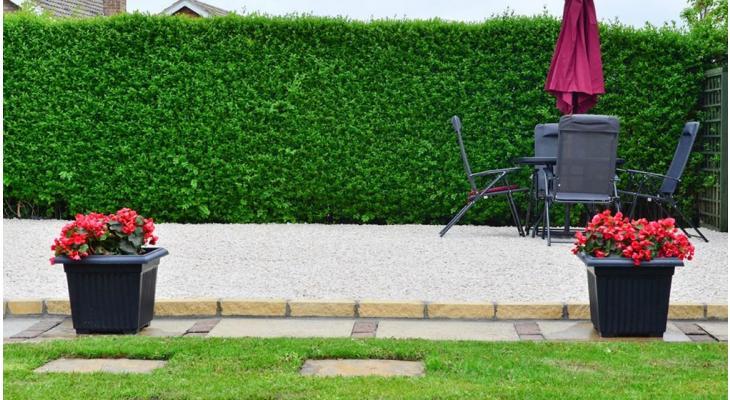 Heckenpflanzen für kleine Gärten
