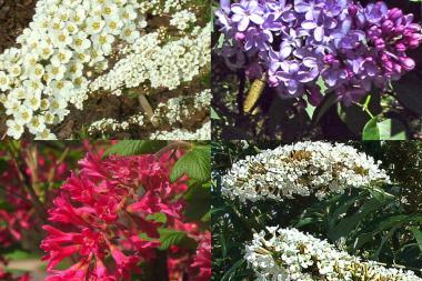 Hecke für Schmetterlinge und Insekten