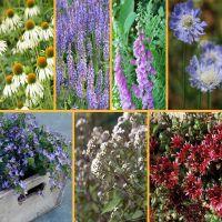 Beetpaket für Schmetterlinge und Bienen