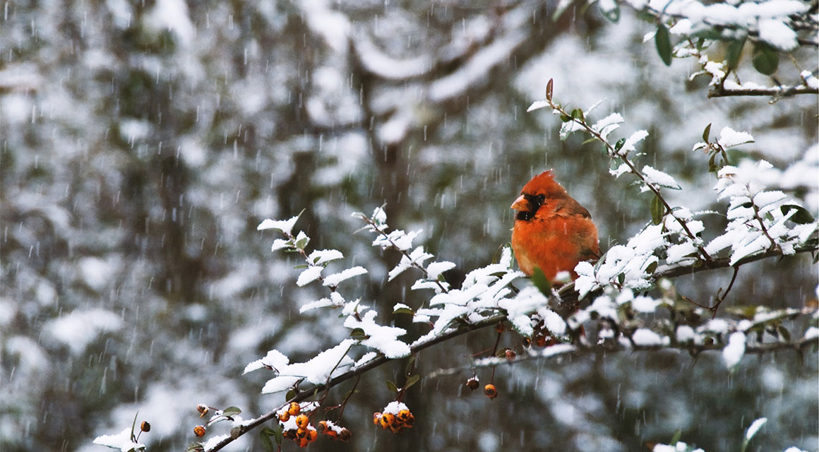 Hagen waar vogels van houden