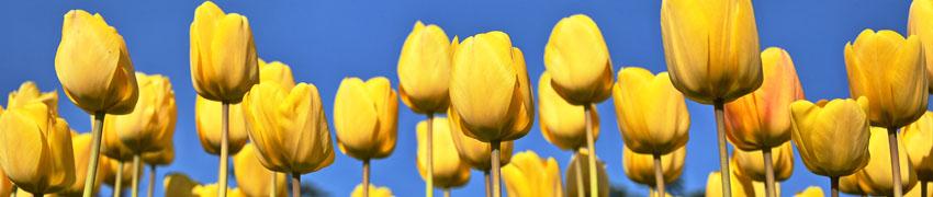 voorjaarsbloeiers