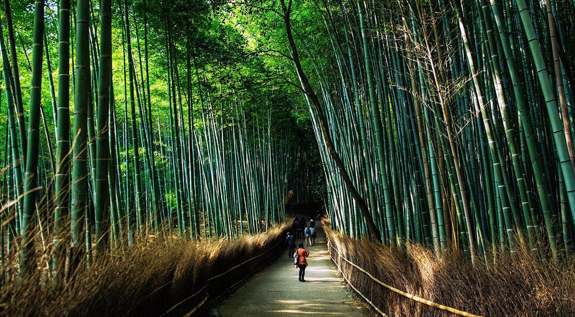 Bambus: dekorativ und nützlich