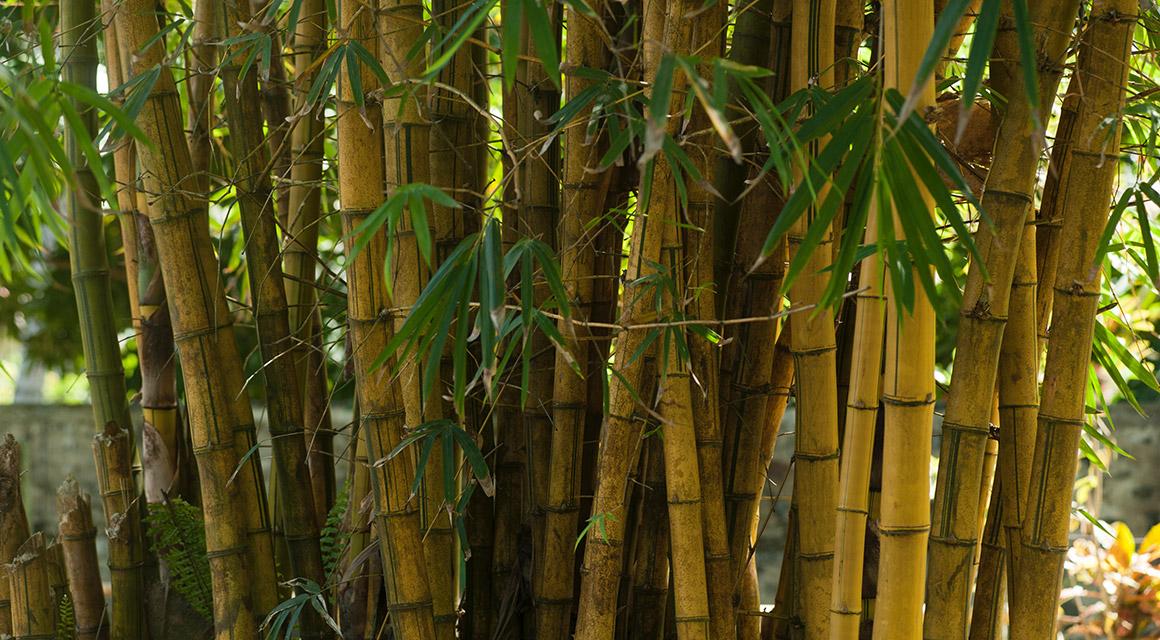 Bambus hat eine lange Lebensdauer