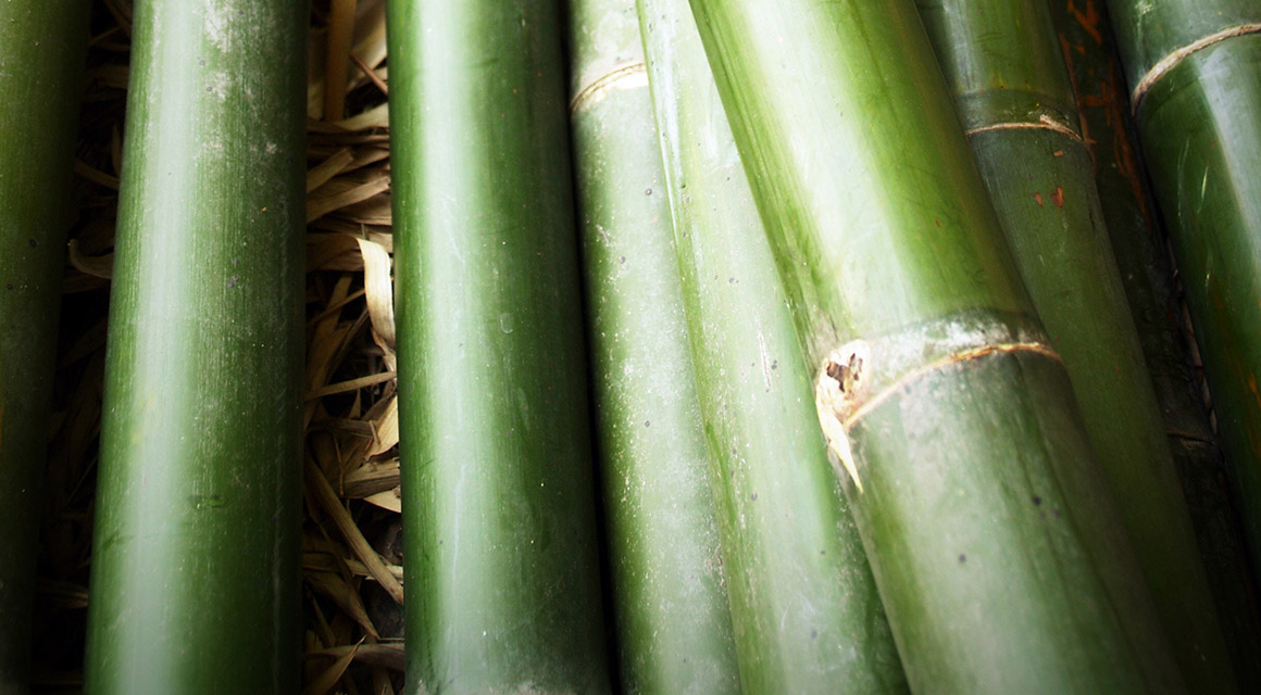 Bambus ist gut für unsere innere Ruhe