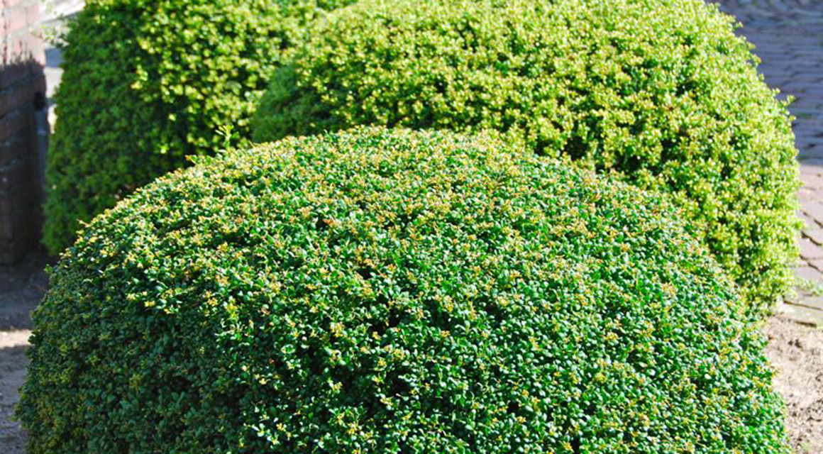Besondere, grün bleibende Gartenabgrenzungen