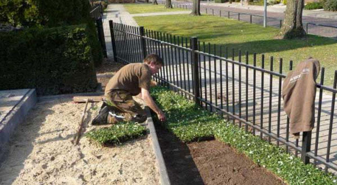 Bodendecker in Ihrem Garten