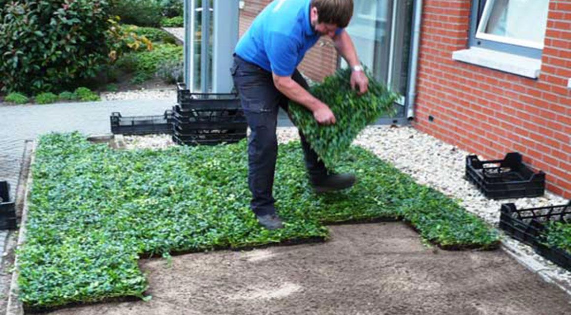 Bodendecker pflanzen und pflegen