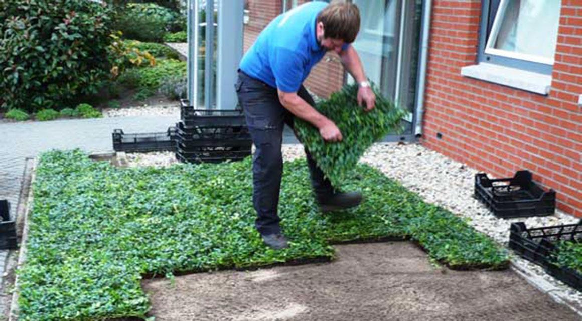Wie sollten Bodendeckermatten gepflanzt werden?