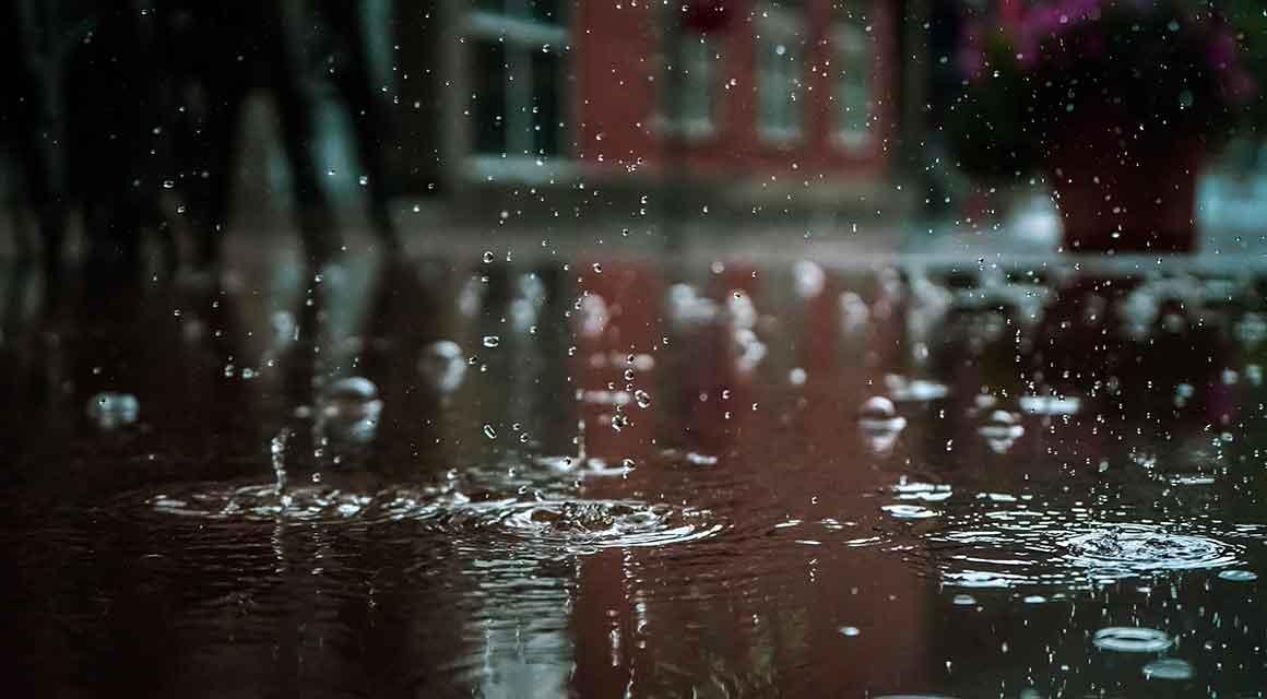 Die Eibe auf einen nassen Boden pflanzen