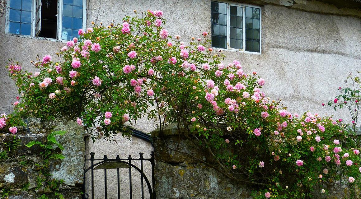 Der englische Garten oder auch Cottage Garten