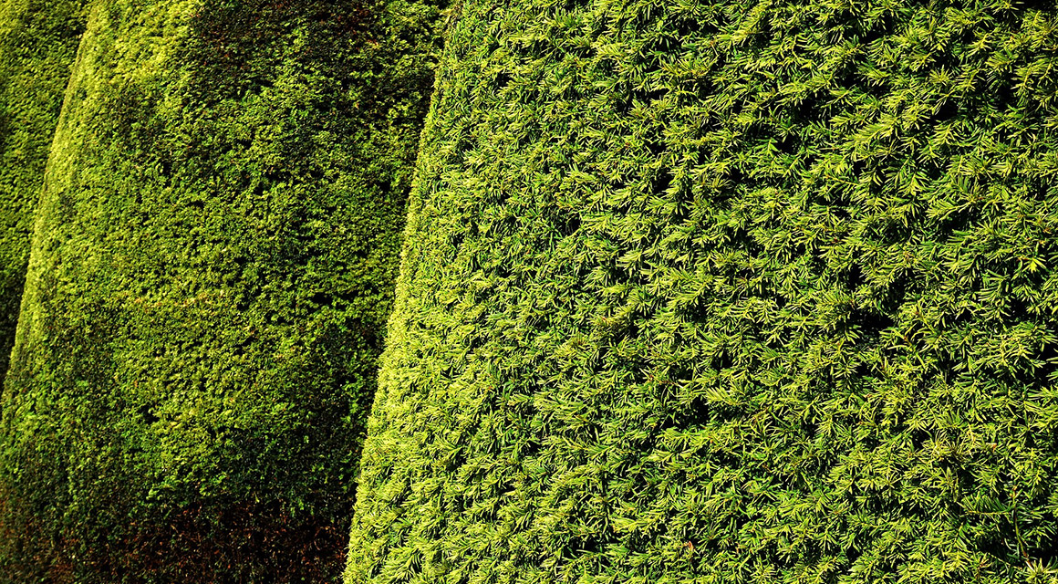 Welche Fertig-Hecke aus Eiben passt gut zu meinem Garten?