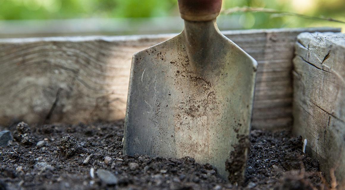 Eine Fertig-Hecke aus Koniferen richtig pflanzen