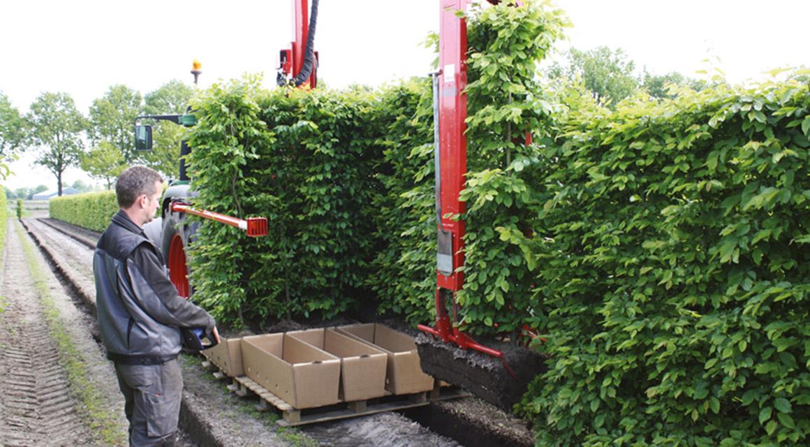 Fertig-Hecken bei Heckenpflanzendirekt.de kaufen