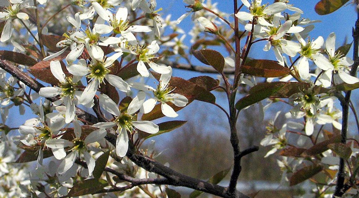 Die schönsten Frühjahrsblüher online kaufen