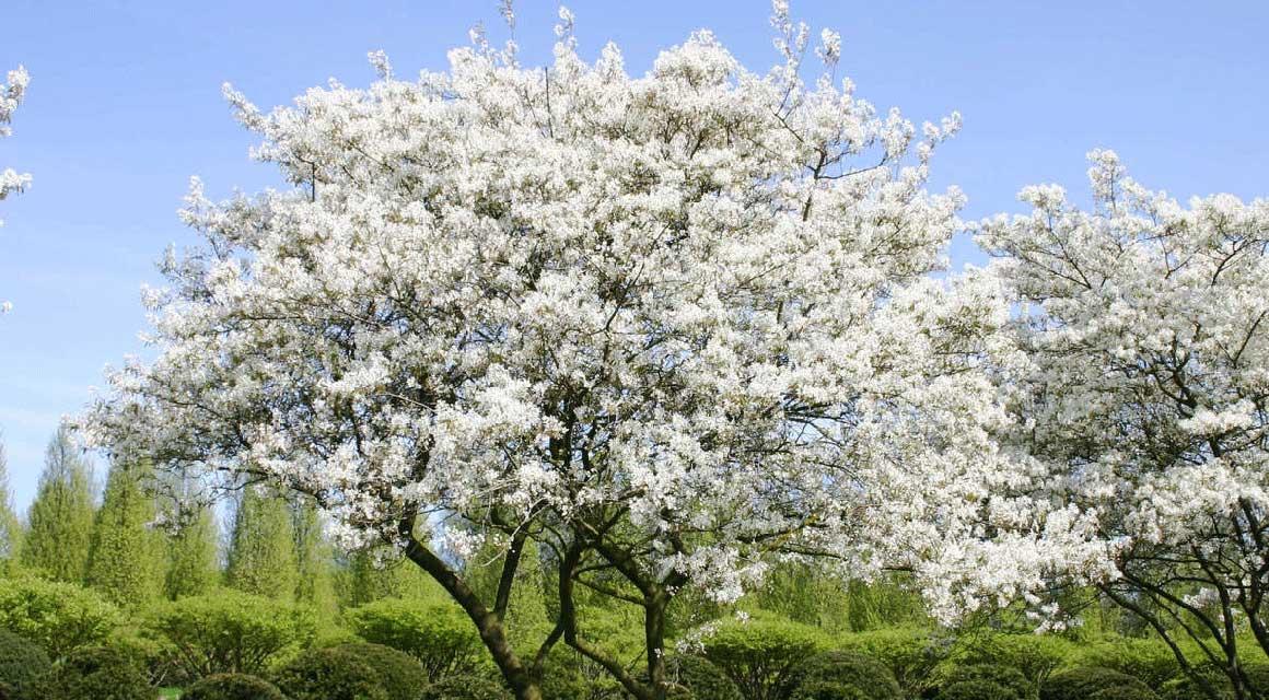 Frühling Hecke düngen