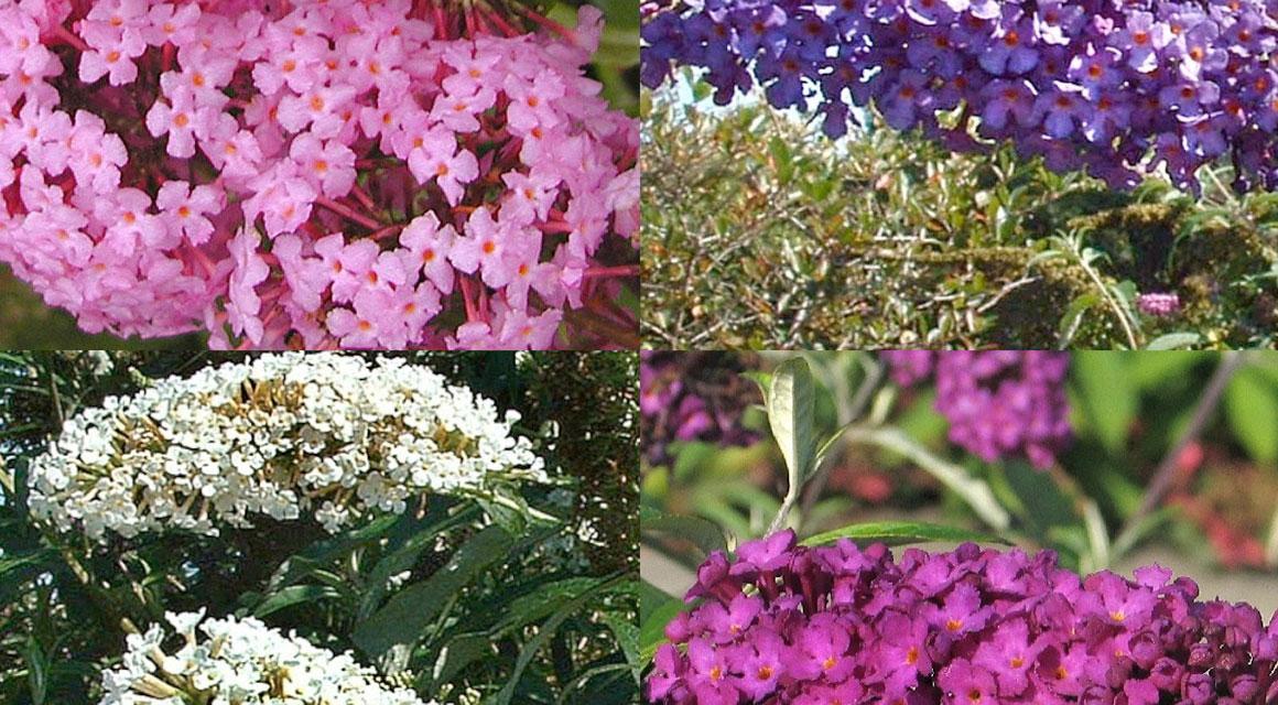 Eine natürliche Gartengestaltung: die wichtigsten Tipps