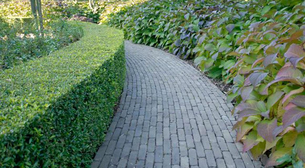 Welche Hecke passt zu einem englischen Garten?