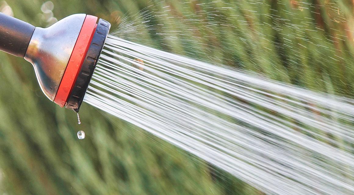 Ihre Heckenpflanzen effektiv bewässern
