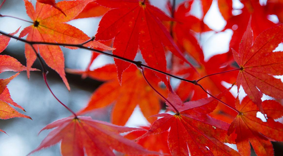 Heckenpflanzen im Herbst schneiden