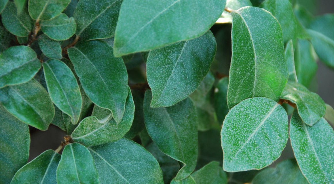 Welche Heckenpflanzen eignen sich für feuchte Böden?
