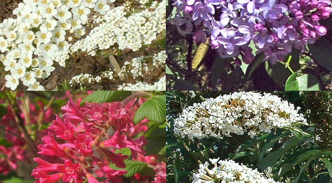 Heckenpflanzen für den naturbelassenen Garten kaufen