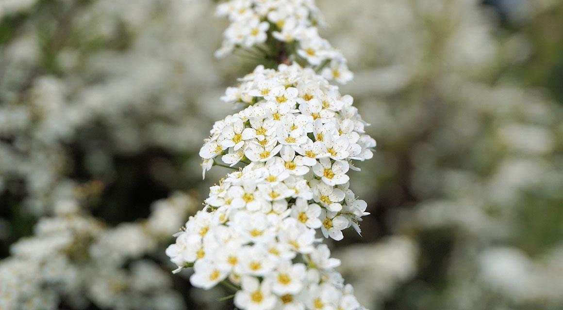 Andere hübsche Frühjahrsblüher