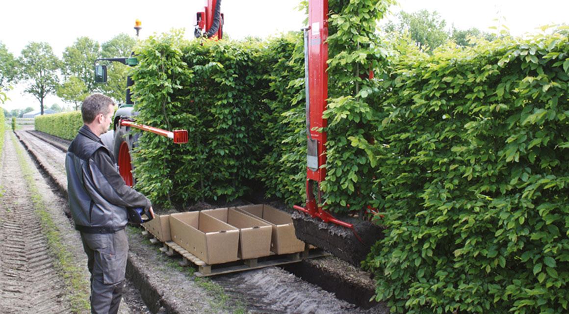 Nehmen Sie nur Pflanzen, die für Ihren Garten geeignet sind.