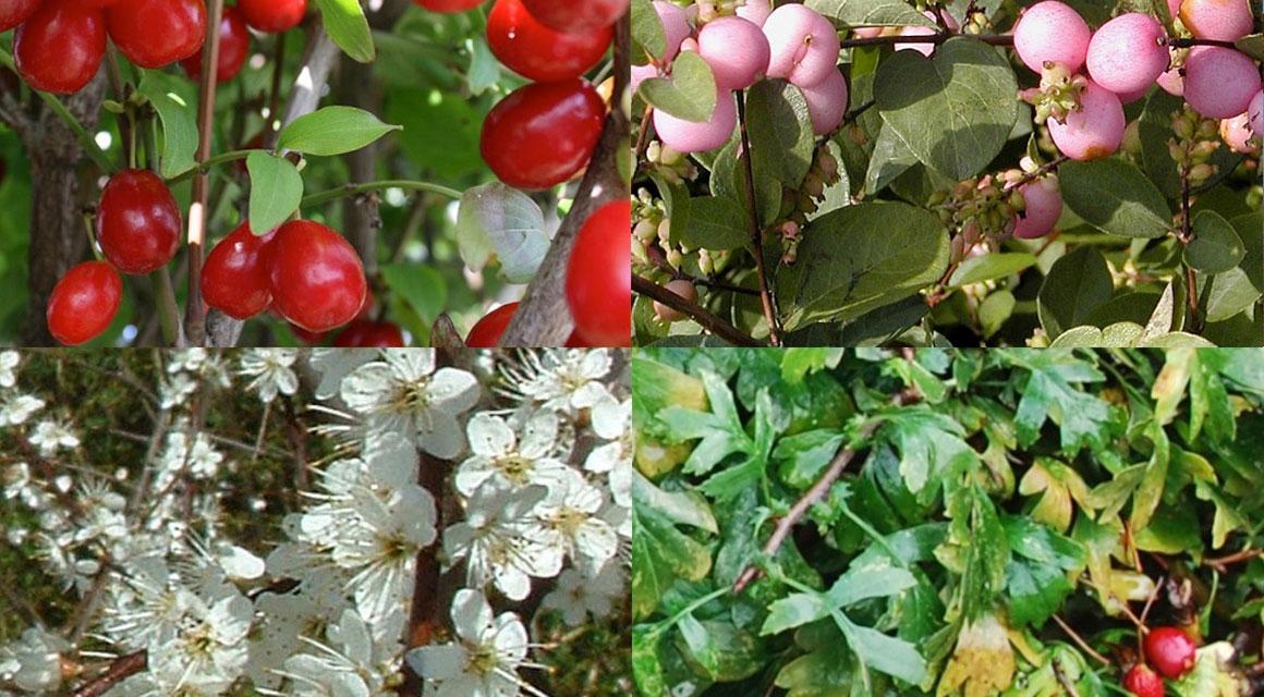 Der naturbelassene Garten: gut für Mensch, Tier und Umwelt