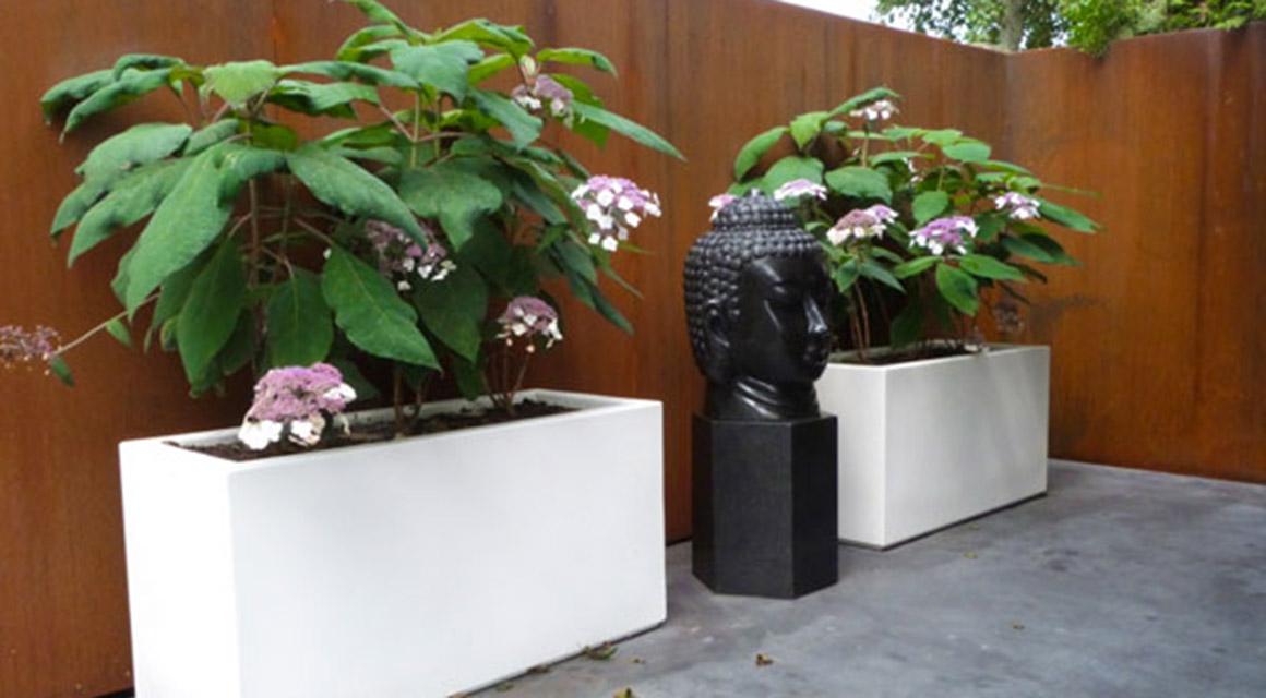 Pflanzen und Gartenzubehör kaufen