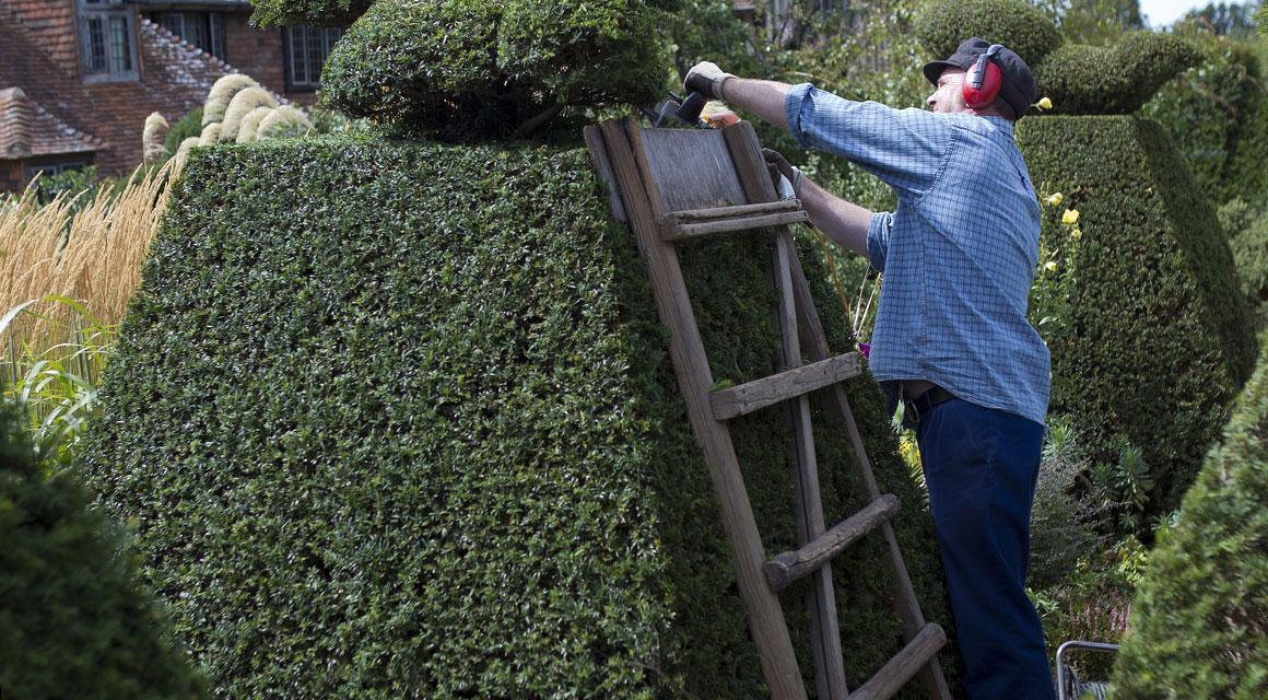 Die Pflanzen sind leicht zu schneiden