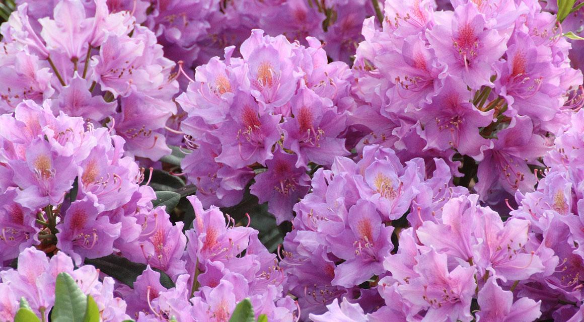 Sommerblüher bestehen aus einer breiten Skala
