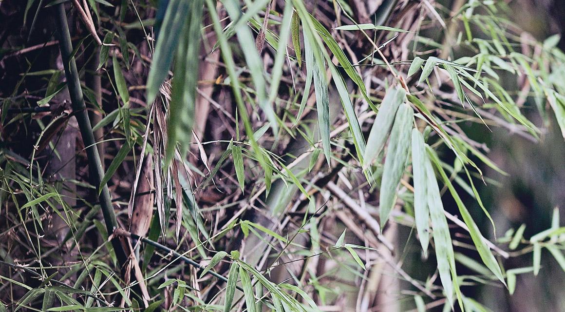 Unser Bambus wuchert nicht