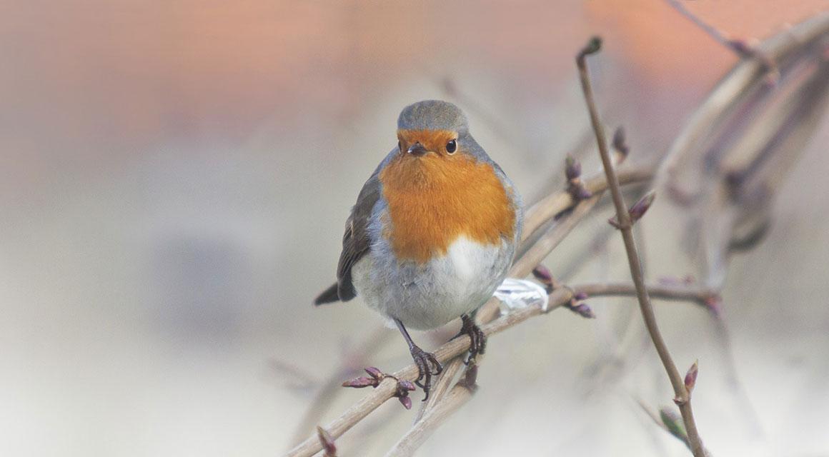 Machen Sie aus Ihrem Garten einen vogelfreundlichen Garten