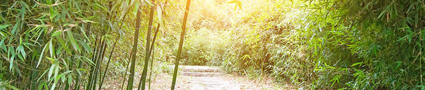 Bambus als Heckenpflanze