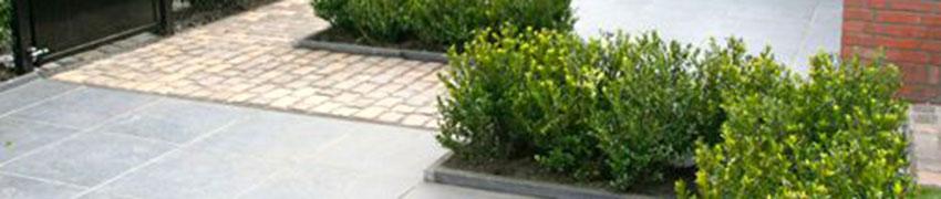 Japanische Stechpalme 'Kanehirae' online bestellen bei Heckenpflanzendirekt.de