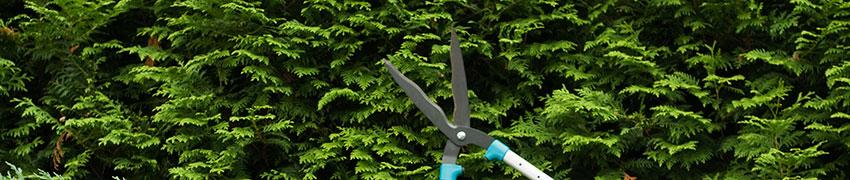 Vom Pflanzenzüchter bis in Ihren Garten