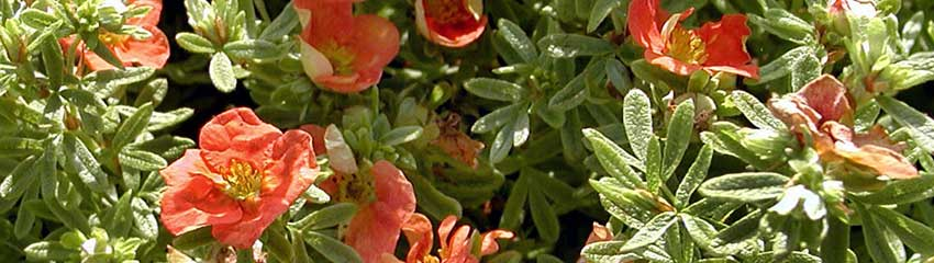 Besonders farbenfrohe Sommerblüher