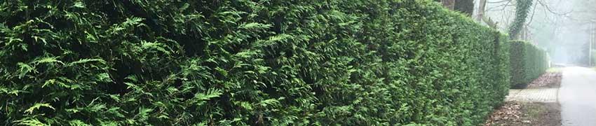 Geschichte des Lebensbaums