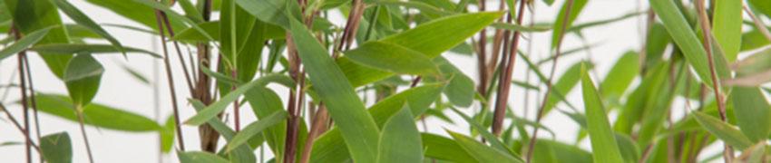 Heckenpflanzen für feuchte Böden