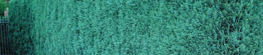 Karger Gartenboden