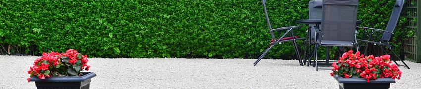 Laubabwerfende Sträucher im Garten