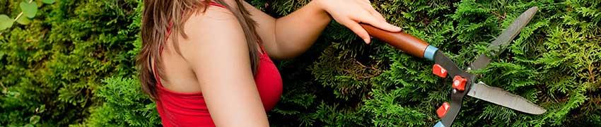 Lebensbaum schneiden - wann?