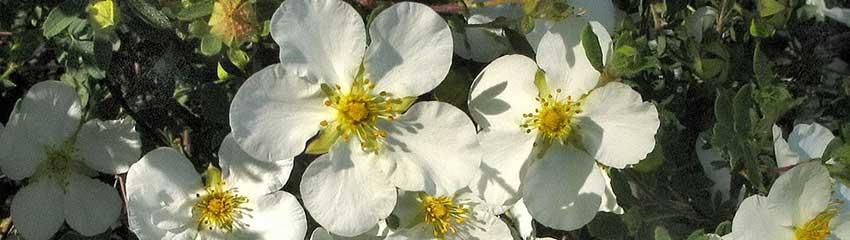 Nährstoffarme Gartenböden verbessern