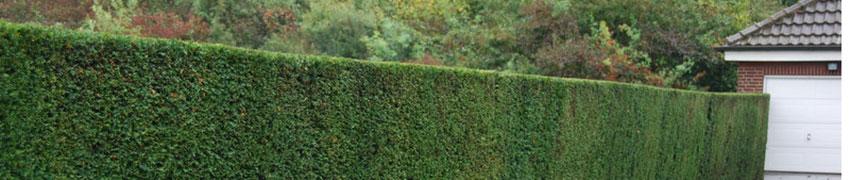 Natürlicher Garten Sichtschutz