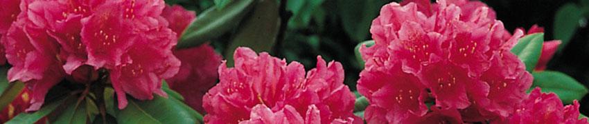 Pflanzen für feuchte Böden kaufen