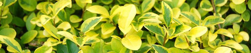 Pflanzen für lehmige Böden kaufen