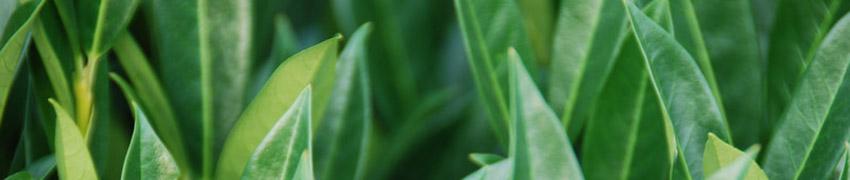 Pflanzen für trockene Böden kaufen