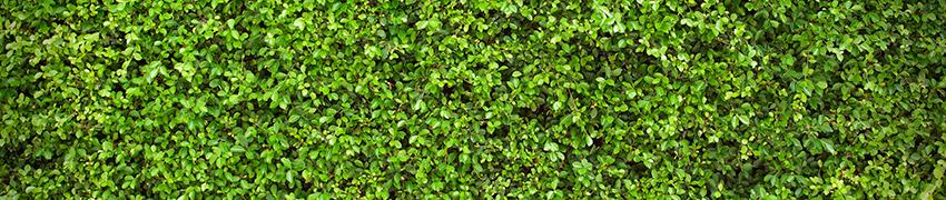 Pflanzen online