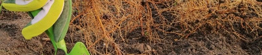 Sträucher pflanzen - die Vorbereitung
