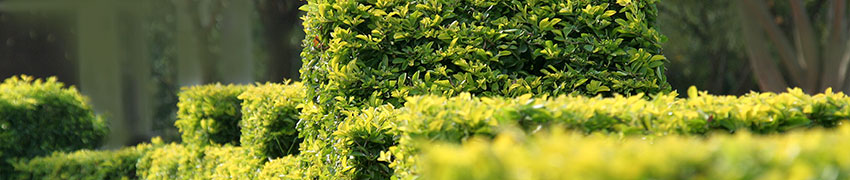 Sträucher pflanzen